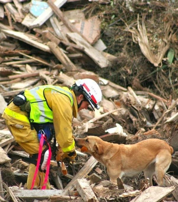 Home Page - National Disaster Search Dog Foundation
