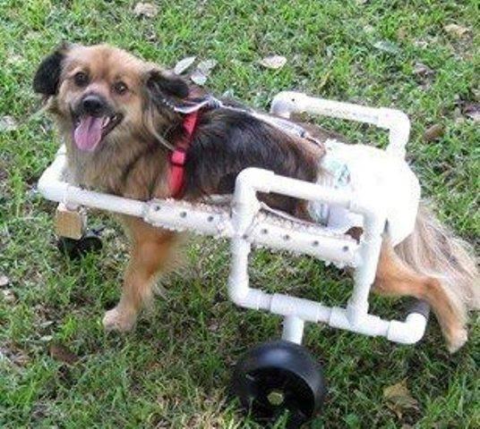 Animal Shelter In Mobile Al : Aide for animals nonprofit in mobile al volunteer read