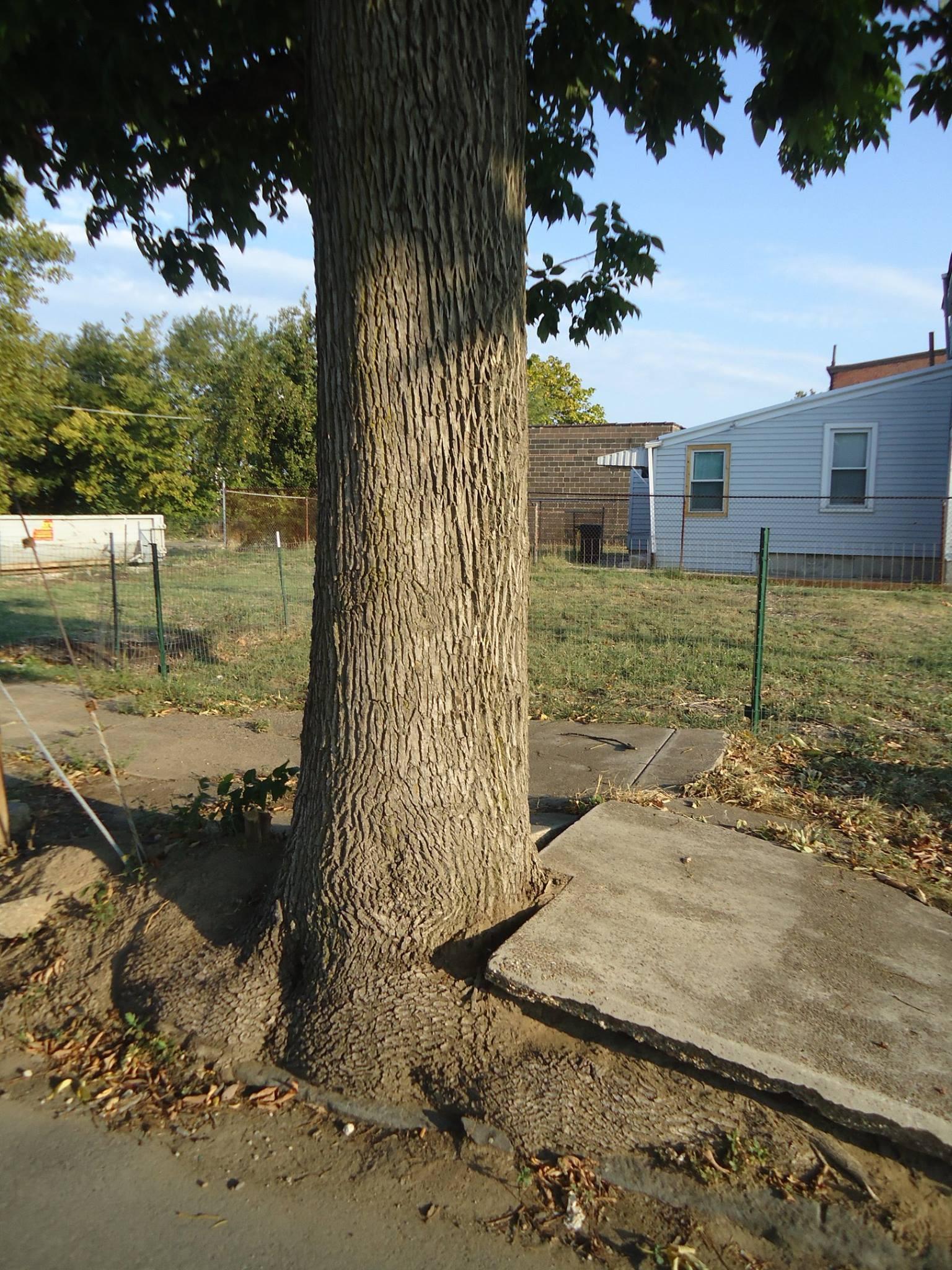 NJ Tree Foundation - Home | Facebook