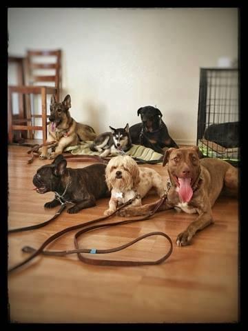 Arizona Small Dog Rescue Facebook