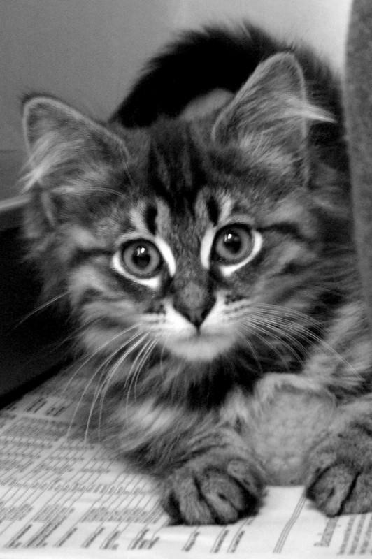News Update - Alley Cat Rescue - Alley Cat Rescue