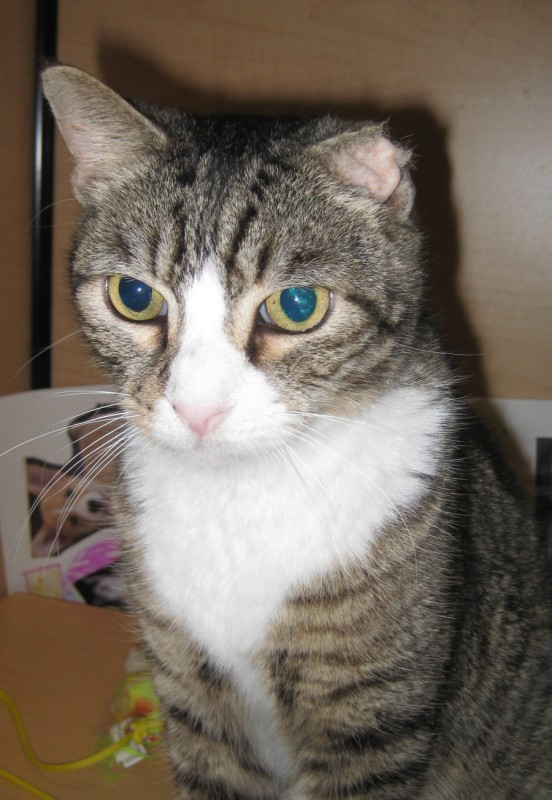 uti for cats treatment