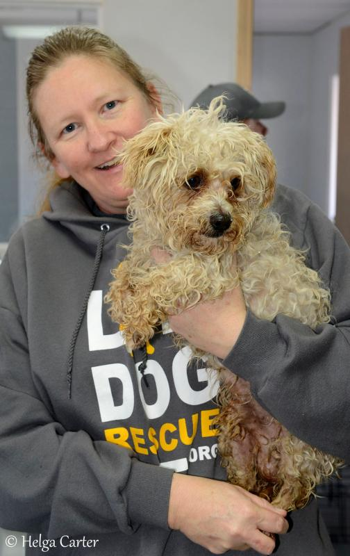 Small Dog Rescue Nm