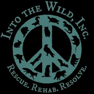 Into The Wild Inc Logo