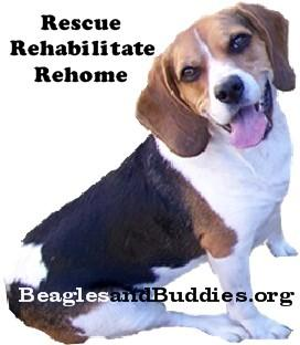 Beagles and Buddies Logo