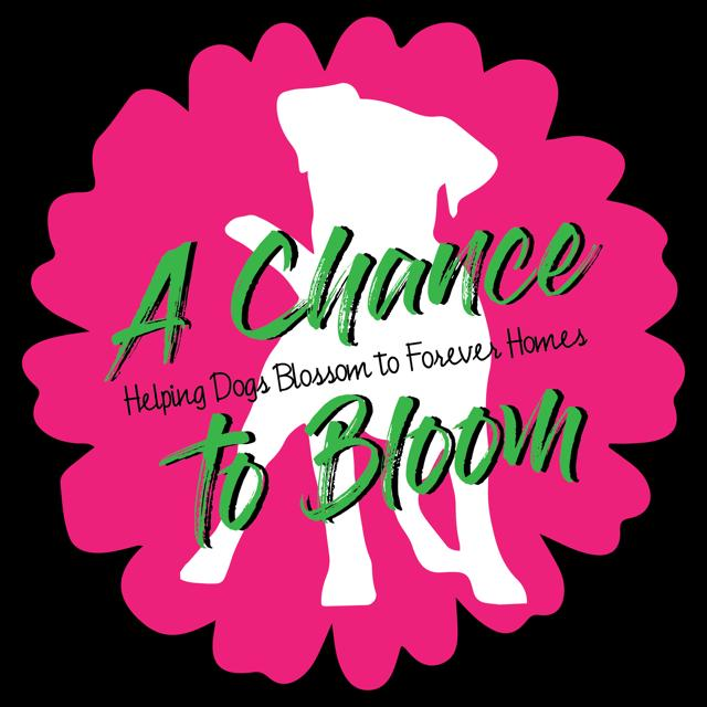 A Chance To Bloom Inc Logo