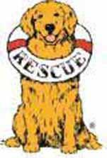 Delaware Valley Golden Retriever Rescue Inc Logo