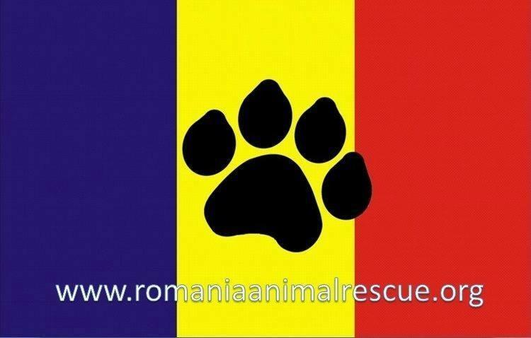 Romania Animal Rescue Inc dba Animal Spay Neuter Intl. Logo
