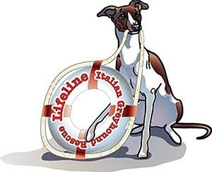 Lifeline Italian Greyhound Rescue Inc Logo
