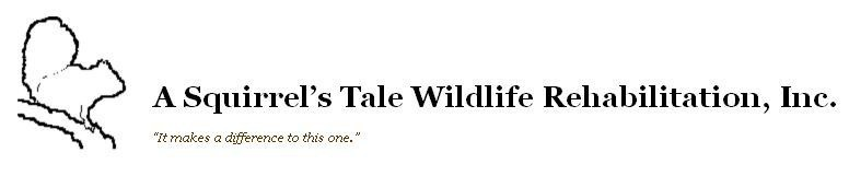 ASQUIRRELS TALE WILDLIFE REHABILITATION Logo