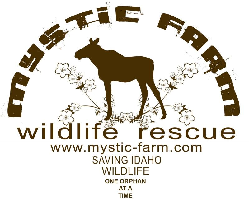 MYSTIC FARM WILDLIFE RESCUE INC Logo