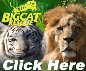 Big Cat Rescue, Corp. Logo
