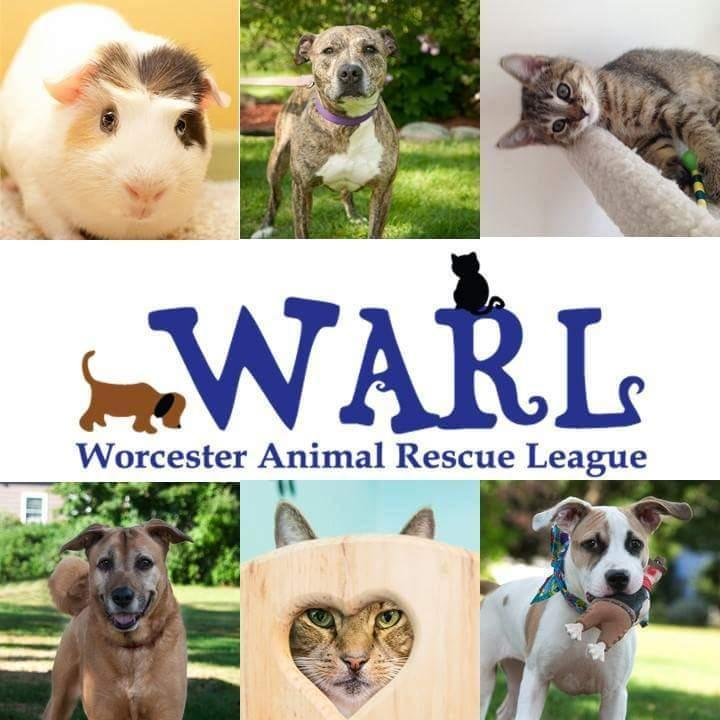 Worcester Animal Rescue League Reviews And Ratings Worcester Ma Donate Volunteer Review Greatnonprofits