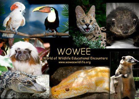 WOWEE ~ World Of Wildlife Education Encounters Logo