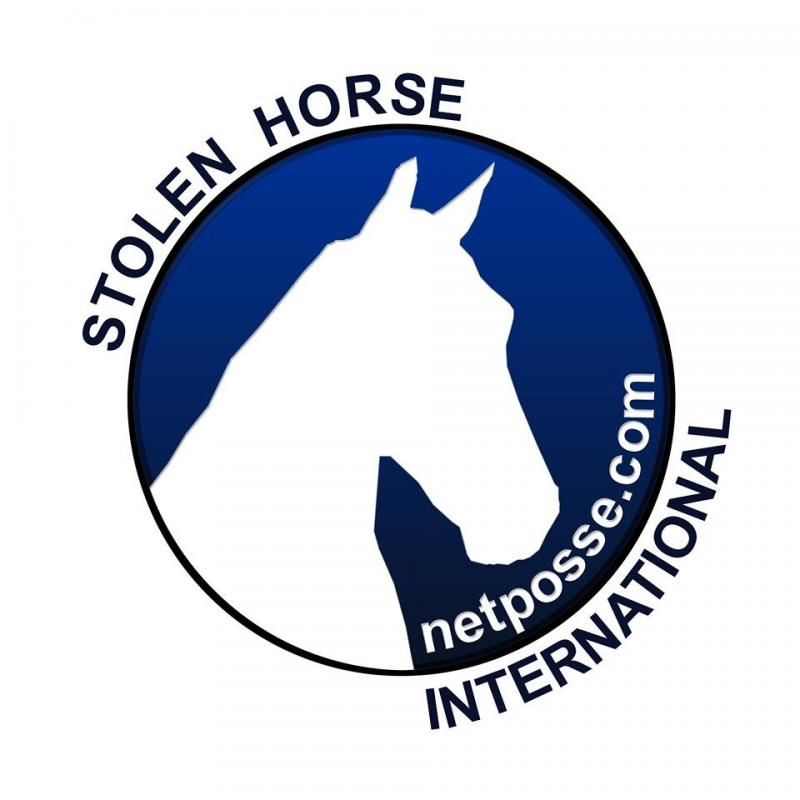 Stolen Horse International Inc Logo