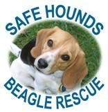 Safe Hounds Beagle Rescue Inc Logo