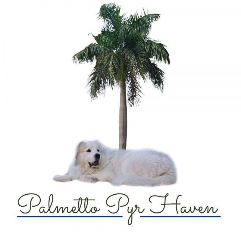 Palmetto Pyr Haven Inc Logo