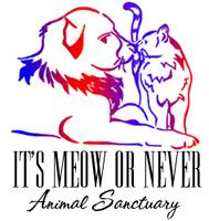 It's Meow or Never Animal Rescue Santuary Logo