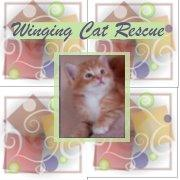 WINGING CAT RESCUE INC Logo
