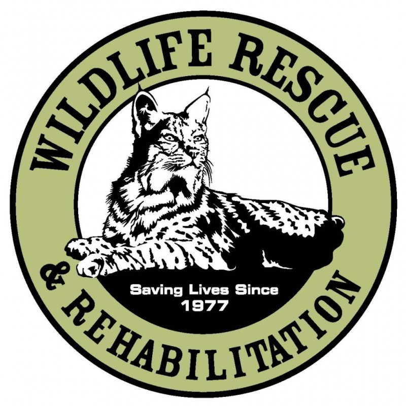 Wildlife Rescue and Rehabilitation Inc Logo