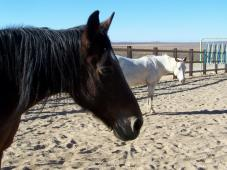 Adobe Mountain Equine Inc