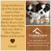 A Forever-Home Rescue Foundation, Inc.