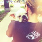 Chicago French Bulldog Rescue Inc NFP