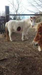 East Tennessee Miniature Horse And Donkey Rescue Reviews and Ratings
