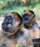 Pacific Primate Sanctuary, Inc.