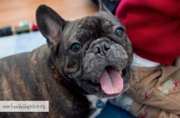 French Bulldog Rescue Network a Nonprofit Corporation