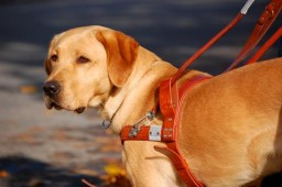 Guiding Eyes for the Blind Inc