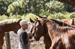 Hidden Acres Rescue for Thoroughbreds (HART)