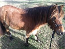 South West Florida Horse Rescue, Inc.