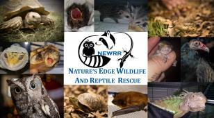 NATURES EDGE WILDLIFE RESCUE Reviews and Ratings | Fort Worth, TX