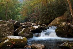 Friends of Great Smoky Mountain National Park Inc