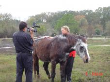 Spirit Acres Farm Equine Rescue and Sanctuary