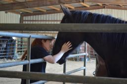 Iron Gait Percherons Inc. - Draft Horse Rescue