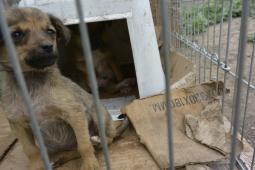 Romanian League in Defense of Animals