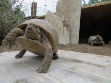 American Tortoise Rescue Reviews and Ratings | Malibu, CA
