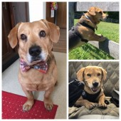 Danny & Ron's Rescue Reviews and Ratings   Camden, SC   Donate
