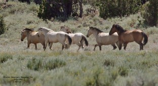 Carter Reservoir Mustangs Inc