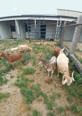 Edwards Foundation For Rescued Animals