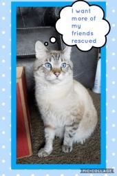 Merlin's Safe Haven Cat Rescue