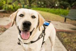 Southeastern Guide Dogs, Inc.