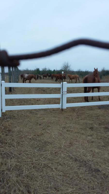Dream Catcher Stables Inc Reviews And Ratings Spring Tx