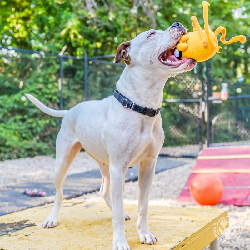 Animal Welfare League Of Arlington Va Inc Reviews And Ratings Arlington Va Donate Volunteer Review Greatnonprofits