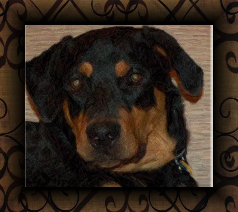 Rottweiler Hearts Rescue Reviews And Ratings Clayton Nc Donate Volunteer Review Greatnonprofits