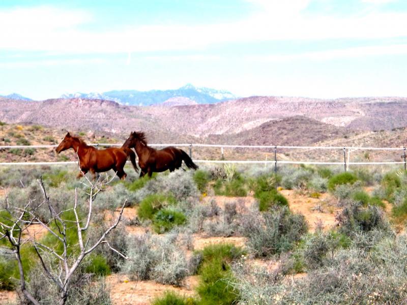 Journeys end ranch animal sanctuary nonprofit in kingman for Sanctuary ranch