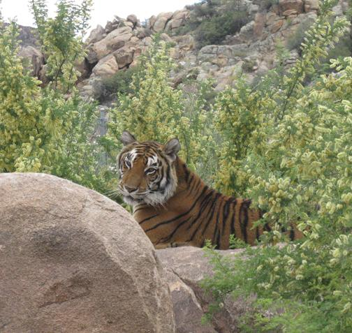Keepers of the Wild nonprofit in Valentine, AZ | Volunteer ...