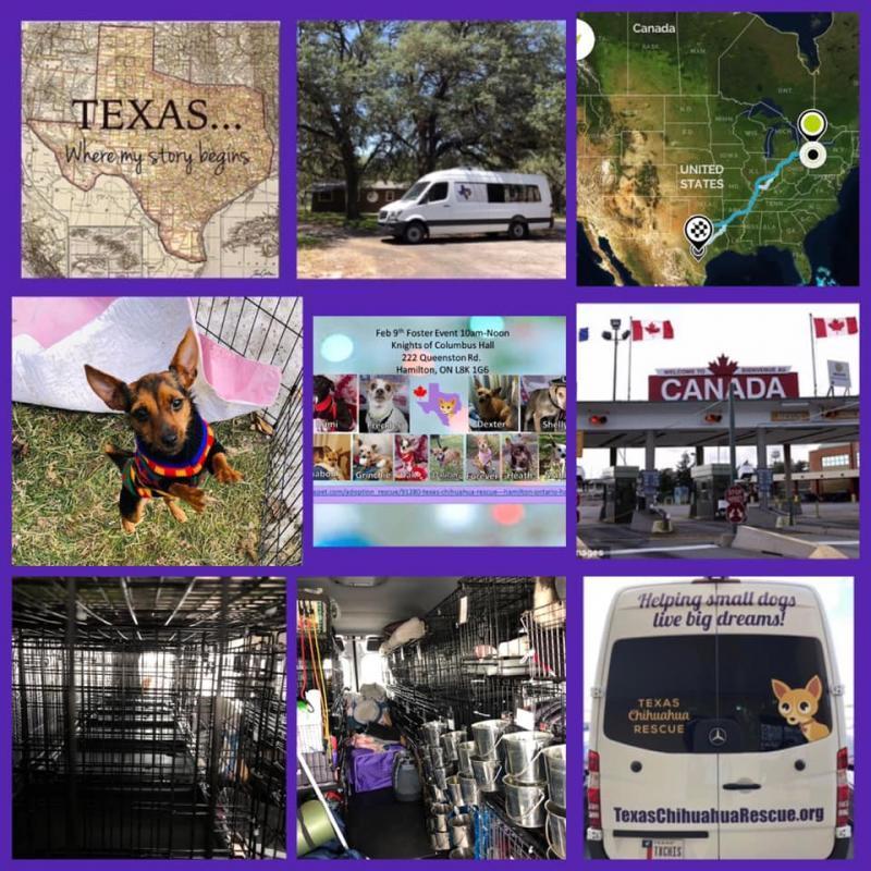 Texas Chihuahua Rescue, Inc Reviews and Ratings | Pleasanton